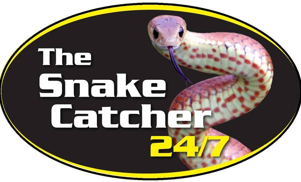 The Snake Catcher
